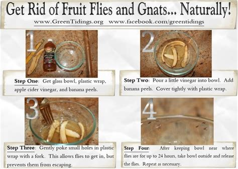 home remedies for house flies 17 best images about bug spray on pinterest grow your