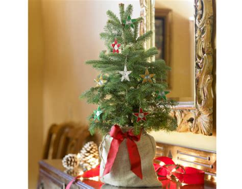 mini christmas tree live how to the greenest trees green holidays