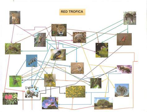 cadenas troficas bosque selva caducifolia red tr 243 fica