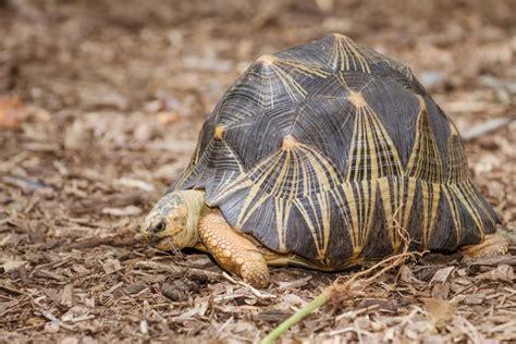 weird  wonderful turtle  tortoise species mnn