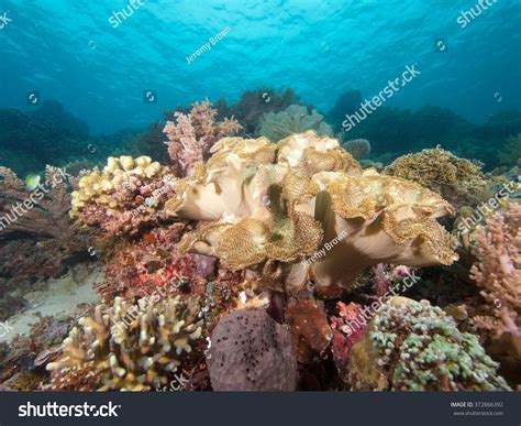 Beautiful Soft Corals Abound On The Spectacular Reefs Of