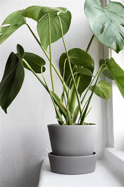 in door plants pot three four plants argements video trendenser