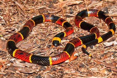 imagenes asombrosas de serpientes im 225 genes y fotos de info serpientes