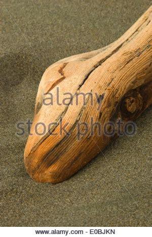 driftwood on the beach at cape blanco oregon stock photo