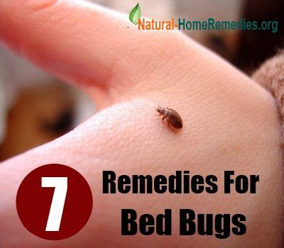 cure for bed bugs home blog and beds on pinterest