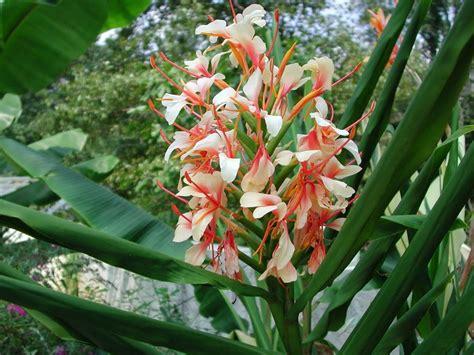 tropical plants  grow  georgia bindu bhatia astrology
