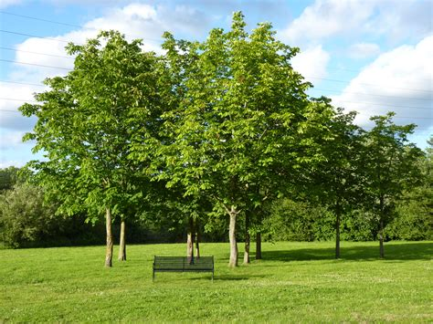 Trees Images | tree is the magic number bromford
