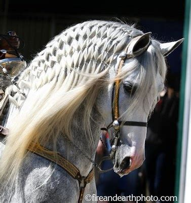 hairstyles for horses 99 best horse hairstyles images on pinterest beautiful