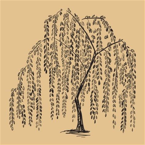 weeping willow tattoo designs amazing weeping willow tree design ideas and meaning