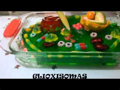 como hacer una celula con dulces c 201 lula vegetal youtube