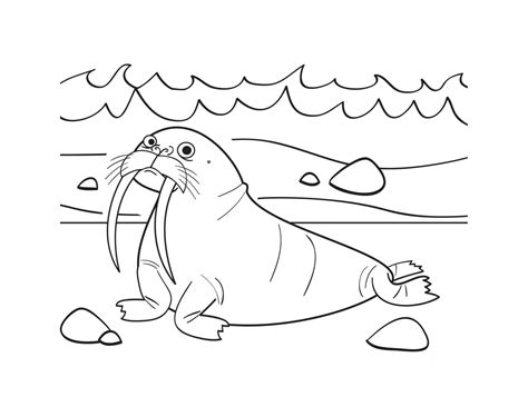 printable coloring pages free printable walrus coloring pages for