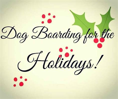boarding places for dogs boarding daycare