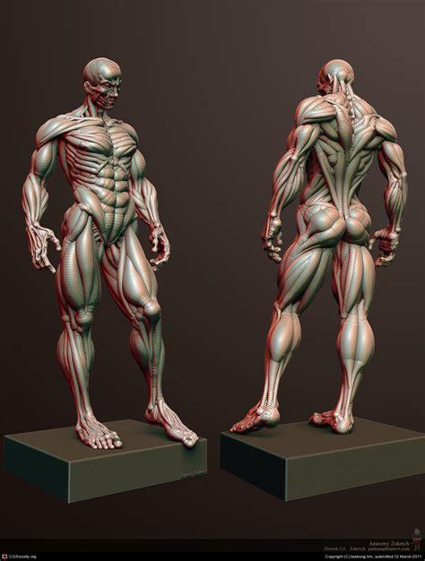 zbrush anatomy tutorial anatomy zsketch by taebong lim anat inspi pinterest