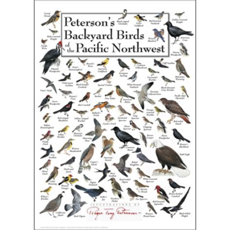 peterson backyard birds wildlife posters fish posters nature posters