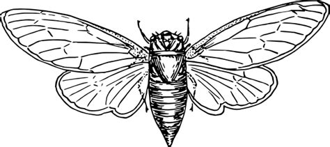 Locust Coloring Page Clipart Best Locust Coloring Page