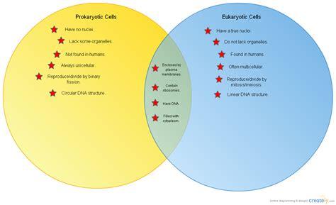 eukaryotic and prokaryotic venn diagram diagram prokaryotes and eukaryotes venn diagram