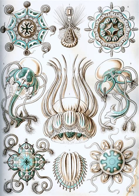 art forms from the kings and pioneers ernst haeckel