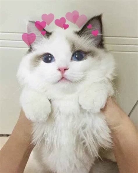 imagenes increibles de gatos fotos gatos tumblr