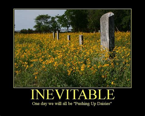 pushing up daisies and mystery series books idioms and euphemisms for janet carr