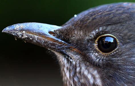 understanding eyesight in birds