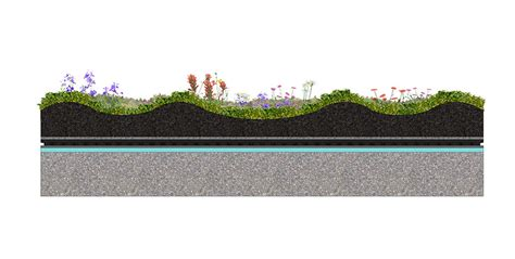 section of green roof green roof types according to planting needs