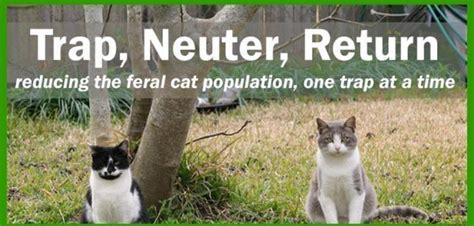 Trap Neuter Return feral cat awareness week 2014