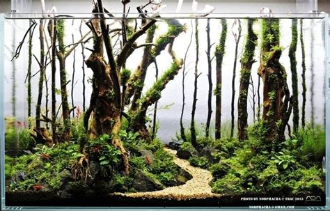 aquascape forest magical forest aquascape project pond pinterest