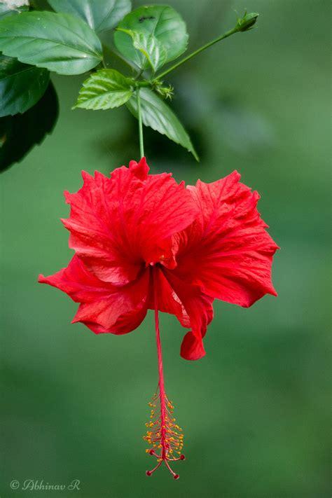 rhythm  nature  nature blog  plants flowers