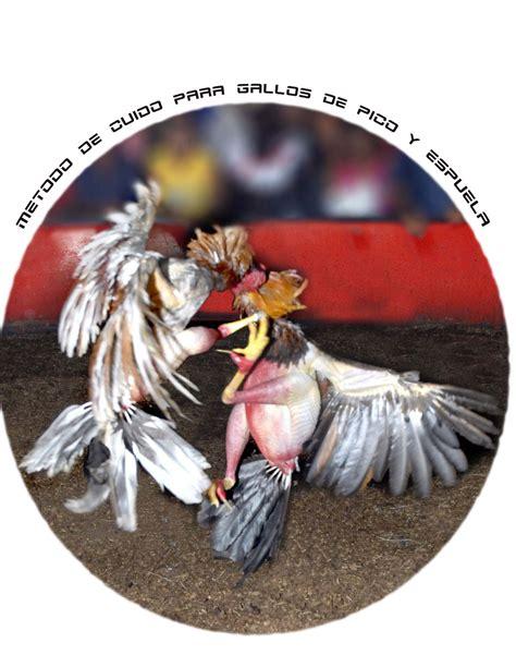 pico y espuelas 2016 metodo de cuido para gallos de pico y espuela los gallos