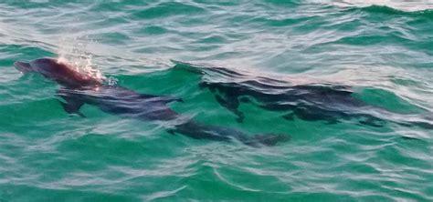 catamaran cruise destin florida award winning dolphin cruise sunset boat tours in