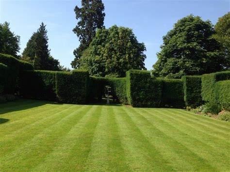 images grass structure plant field lawn meadow