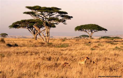 african safari african safari landscape wallpapers gallery