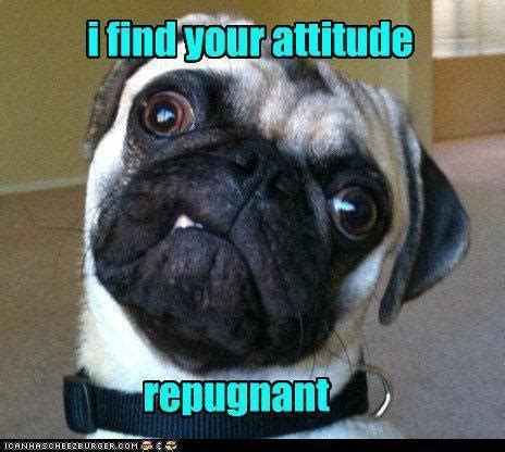 pug attitude repugnant memes image memes at relatably