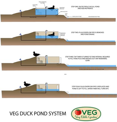 how to clean a pond without draining it ducks on raising ducks duck house and duck pens