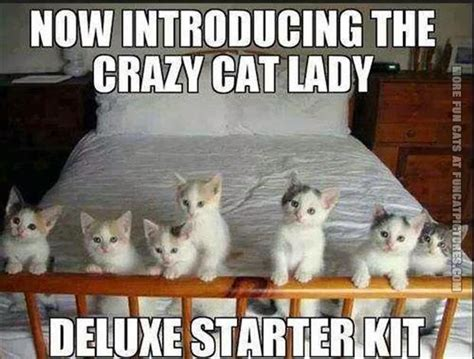Funny Cat Lady Memes - crazy cat lady starter kit meme