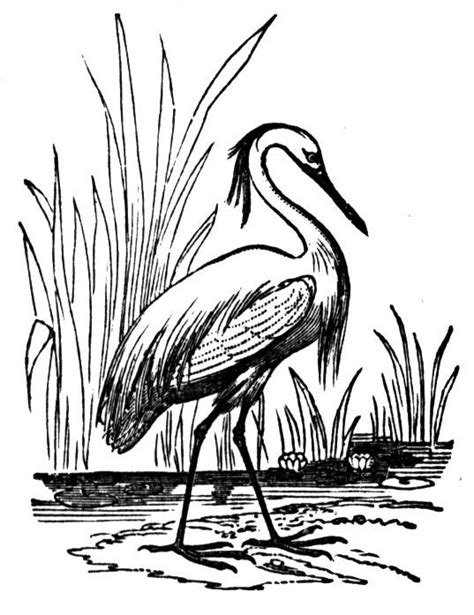 free great blue heron coloring pages