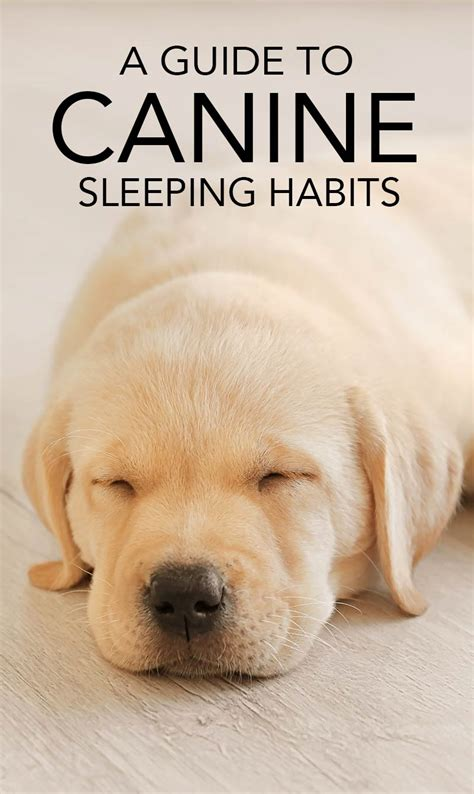 do dogs get their period how do dogs sleep find out in this guide to canine sleeping habits
