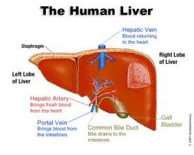 Detoxification liver and psoriasis