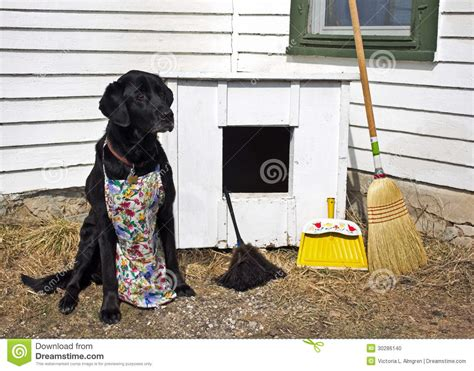 dog cleans house spring cleaning the dog house stock photo image 30286140