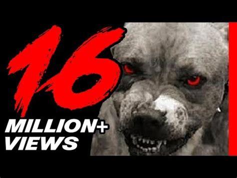 top 10 dangerous dogs list of indian breeds funnycat tv