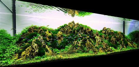 Aquascaping Tropical Fish Tank by Bubbles Aquarium Aquascapes 2009 Aquascaping Gallery