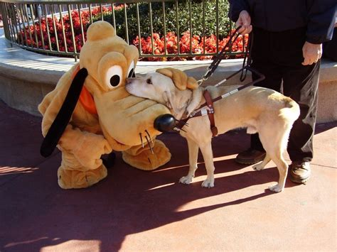 dogs at disney world a guide meets a friend at disney world pics