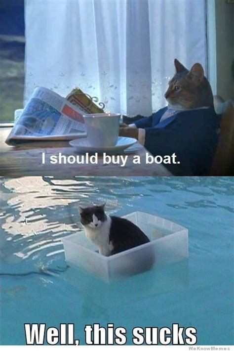 I Should Buy A Boat Meme - cat finally buys a boat weknowmemes