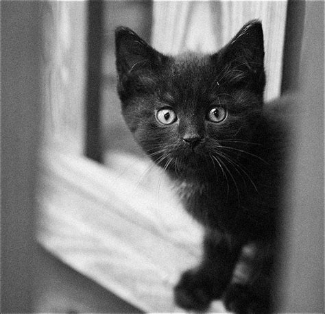 how to make a scared kitten comfortable best 25 black and white kittens ideas on pinterest