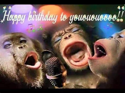 imagenes happy birthday funny 1000 images about happy birthday on pinterest birthday