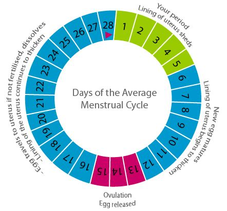 Calendar Method Calculator For Irregular Menstrual Cycle Period Menstruation Ovulation Period