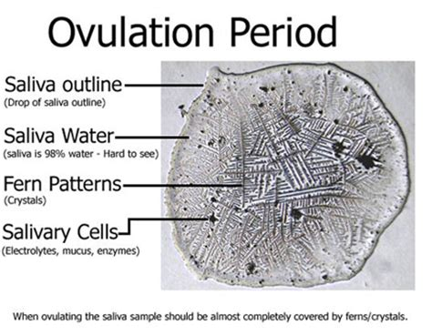 pattern days meaning introduction and faq for ferning to predict ovulation and