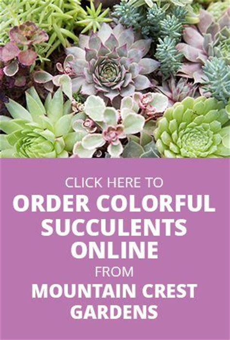 Mountain Crest Gardens by 17 Best Ideas About Succulents On Buy