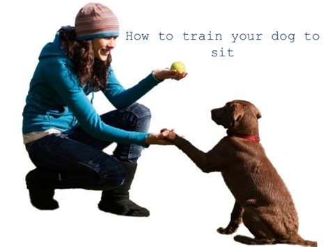 how to trained dogs how to your 2