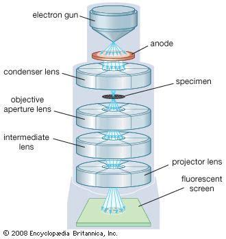 transmission electron microscope | instrument | britannica.com